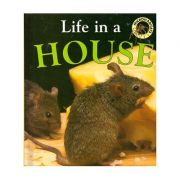 Life in a House (Microhabitats) ( Editura: Outlet - carte limba engleza, Autor: Clare Oliver ISBN 0-237-52303-5 )